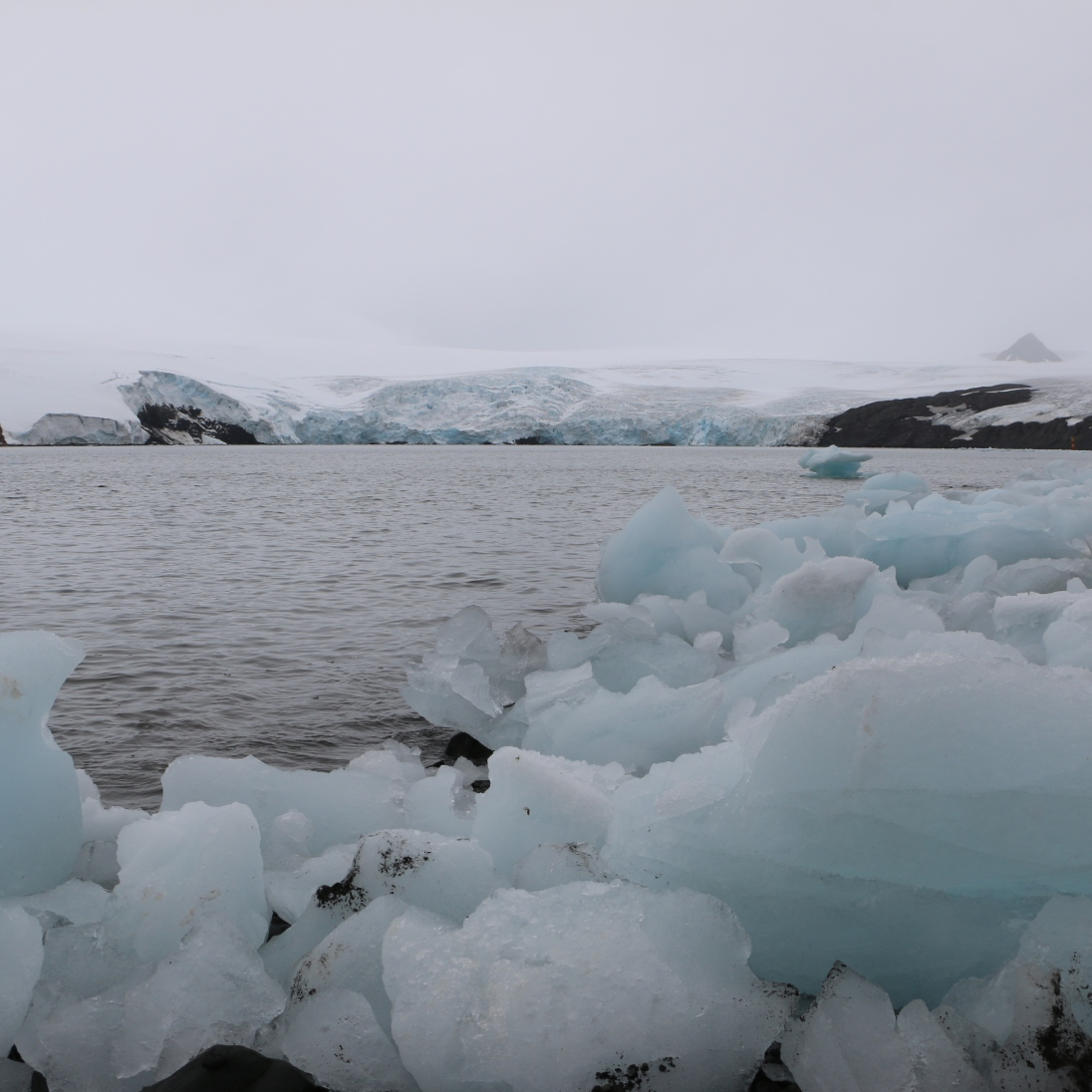 Ice and glaciers in Potter's Cove.